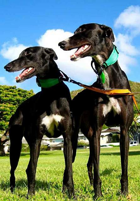 greyhounds-hold-two-honors-photo-u1