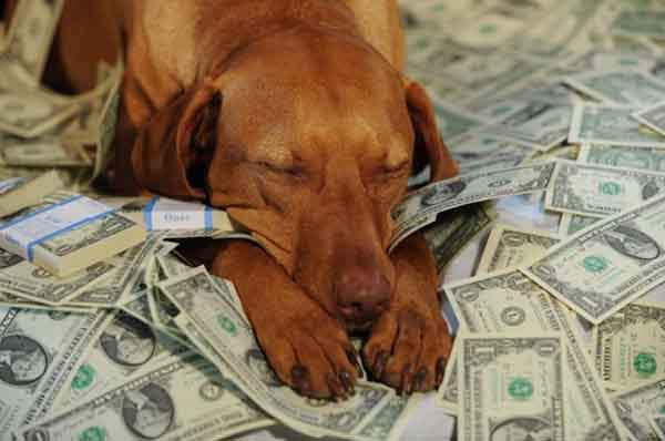 there-are-plenty-of-wealthy-dogs-photo-u1