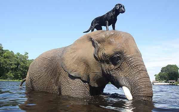 unusual-animal-friendship-55__880