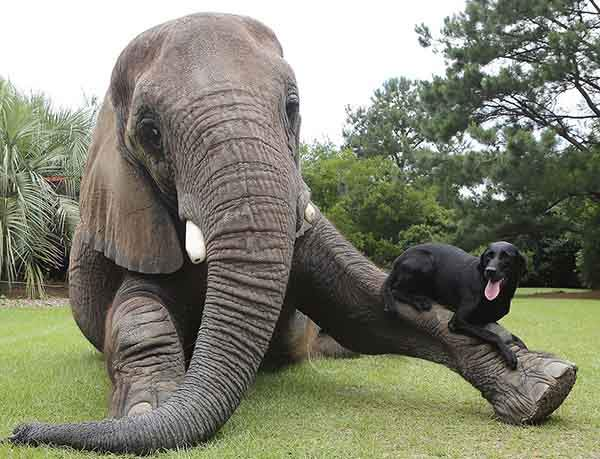 unusual-animal-friendship-71