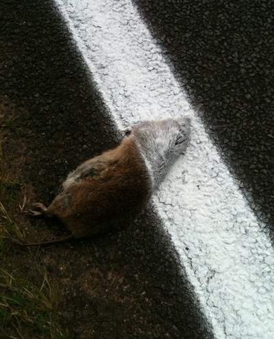 Roadkill-paint