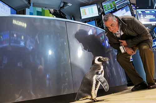 a-trader-looks-at-pete-the-penguin-of-seaworld-entertainment-as-he-walks-on-the-floor-of-the-new-york-stock-exchange-on-jan-15-seaworld-was-celebrating-its-50th-anniversary