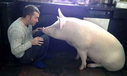 esther-wonder-pig-sanctuary-steve-derek-47