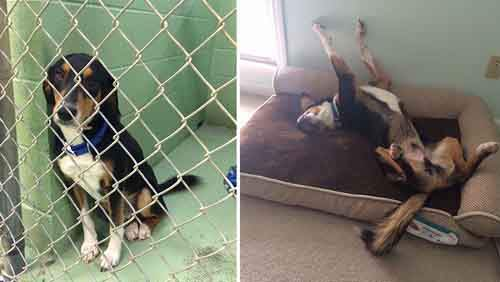 6-pet-adoption-before-and-after-5__880
