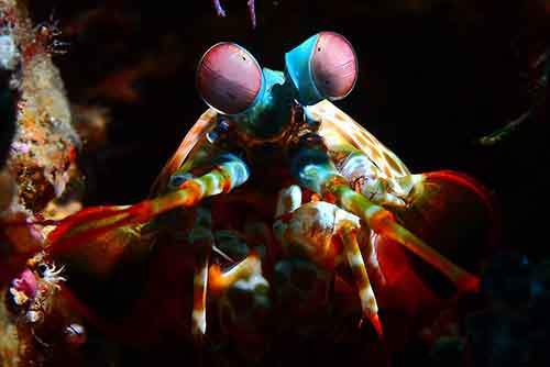 Amazing-Underwater-Weird-Creatures31__880