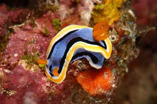 Amazing-Underwater-Weird-Creatures41__880