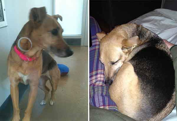 pet-adoption-before-and-after-12__880