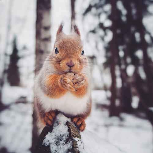 20-photos-by-photographer-whos-friends-are-animals-konsta-punkka-artnaz-com-12