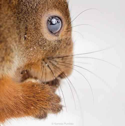 20-photos-by-photographer-whos-friends-are-animals-konsta-punkka-artnaz-com-15