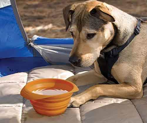 Collapsible-Travel-Pet-Bowl