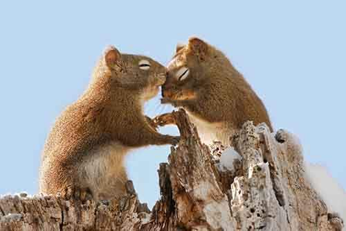 animals-love-couple-1__880