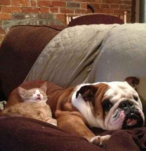 cute-cats-sleeping-on-dogs-19__605