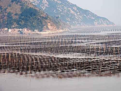 go-fishing-in-the-xiapu-mudflat-located-along-the-southeast-china-coastline-in-fujiang-province