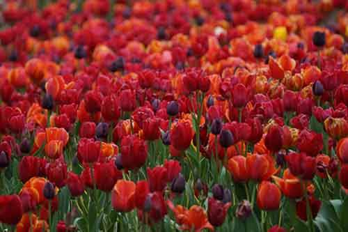 20-places-on-the-planet-which-become-more-colorful-when-spring-comes-artnaz-com-2