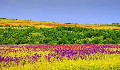20-places-on-the-planet-which-become-more-colorful-when-spring-comes-artnaz-com-4