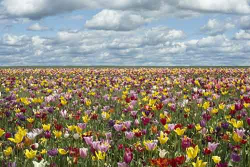20-places-on-the-planet-which-become-more-colorful-when-spring-comes-artnaz-com-5