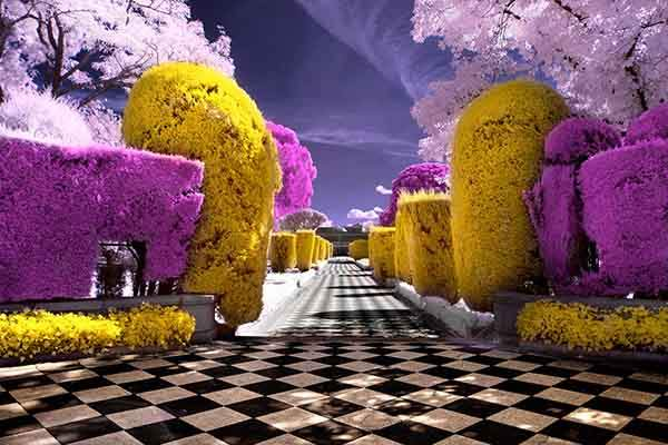 Infrared photo of a garden