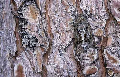 camouflaged_animals_2