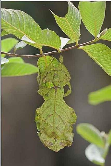 camouflaged_animals_22