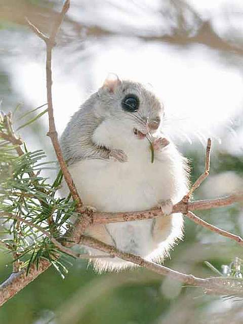 cute-animals-hokkaido-ezo-japan-coverimage