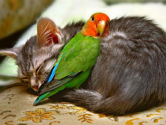 unlikely-sleeping-buddies-animal-friendship-coverimage