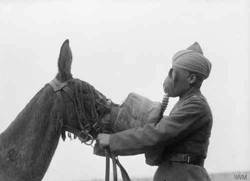 1945.-Gas-mask-being-fitted-to-a-mule-by-a-Sikh-soldier-of-the-British-Indian-Army.-c.-1939-1945