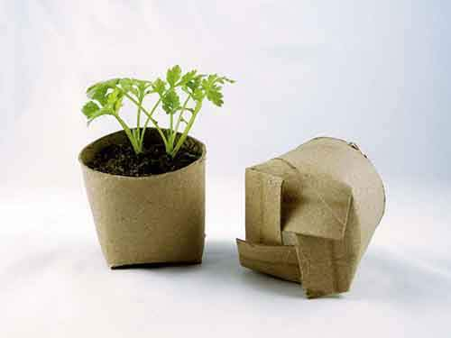 biodegradable-planters
