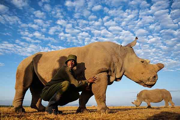 last-northern-white-rhinoceros-conservation-rangers-kenya-2