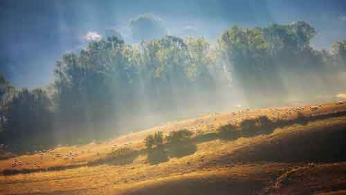 45-Sheeps-in-rays-950__880