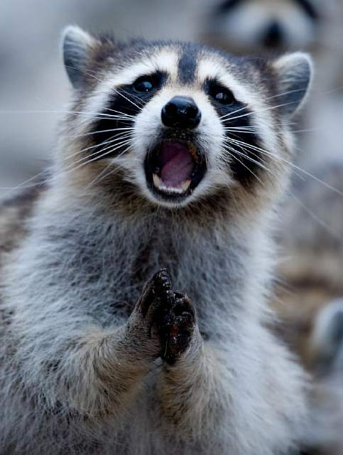surprised-shocked-animals-funny-37__700