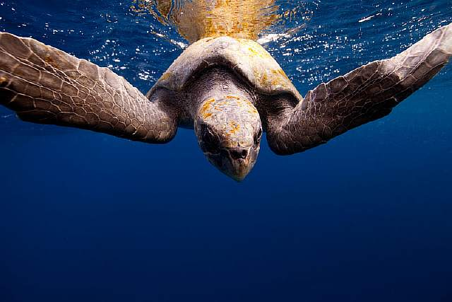 underwater-animal-photography-by-jorge-cervera-hauser-6