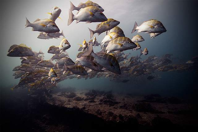underwater-animal-photography-by-jorge-cervera-hauser-9