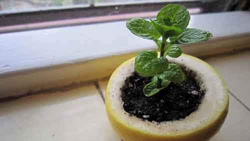 24-Highly-Creative-and-Clever-Gardening-Tricks-to-Enhance-Garden