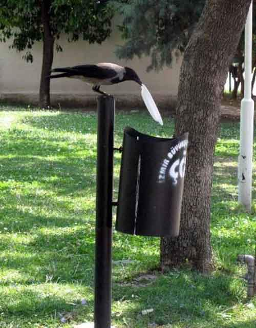 crow-cleans-garbage-4