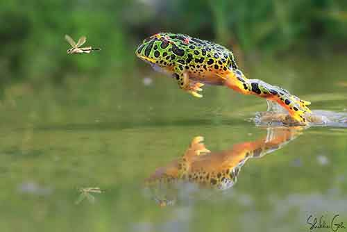 frog-photography-15__880