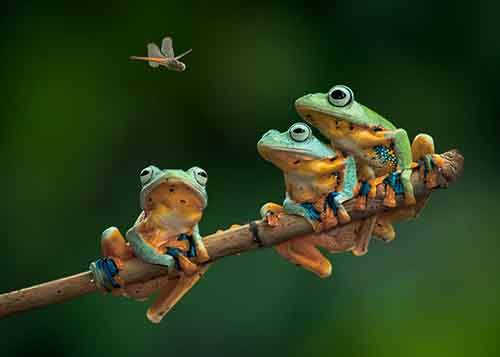 frog-photography-20__880