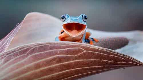 frog-photography-5__880
