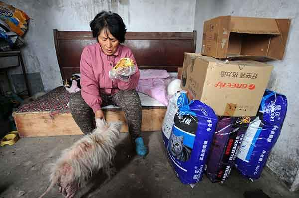 rescued-dogs-yulin-dog-meat-festival-china-13