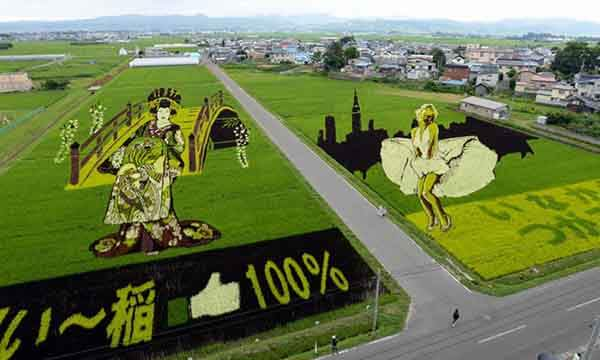 these-rice-fields-in-japan-look-like-ordinary-rice-fields-but-take-a-look-what-happens-next-artnaz-com-16