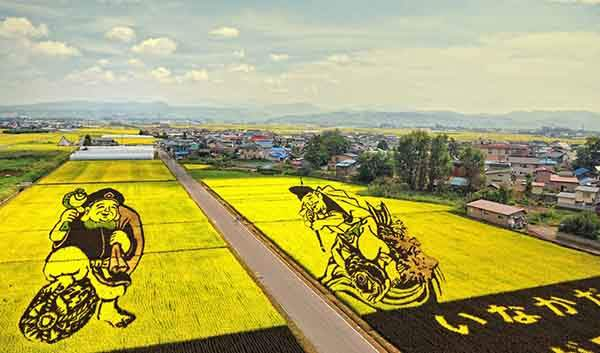 these-rice-fields-in-japan-look-like-ordinary-rice-fields-but-take-a-look-what-happens-next-artnaz-com-17