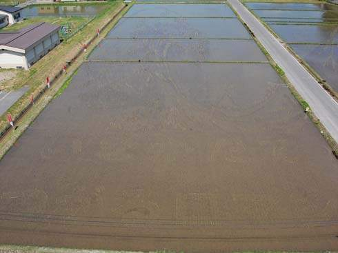 these-rice-fields-in-japan-look-like-ordinary-rice-fields-but-take-a-look-what-happens-next-artnaz-com-2