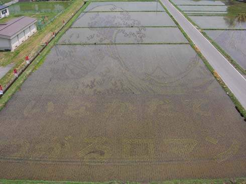 these-rice-fields-in-japan-look-like-ordinary-rice-fields-but-take-a-look-what-happens-next-artnaz-com-3