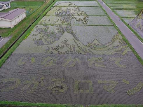 these-rice-fields-in-japan-look-like-ordinary-rice-fields-but-take-a-look-what-happens-next-artnaz-com-4