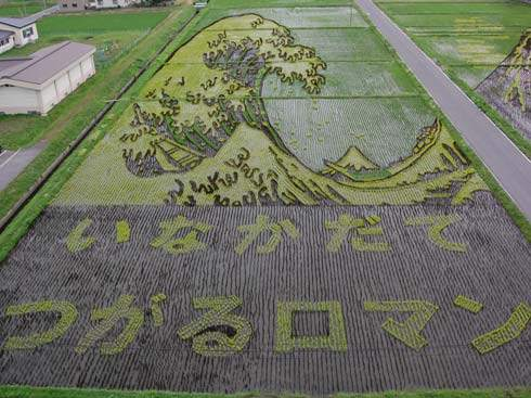 these-rice-fields-in-japan-look-like-ordinary-rice-fields-but-take-a-look-what-happens-next-artnaz-com-5