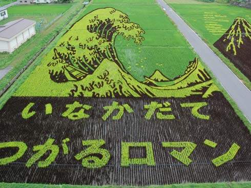 these-rice-fields-in-japan-look-like-ordinary-rice-fields-but-take-a-look-what-happens-next-artnaz-com-6