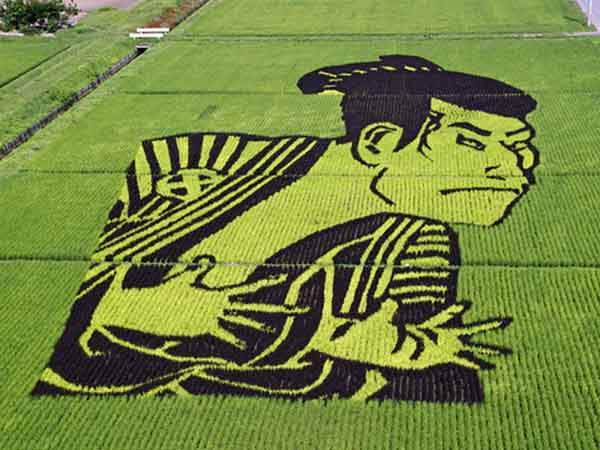 these-rice-fields-in-japan-look-like-ordinary-rice-fields-but-take-a-look-what-happens-next-artnaz-com-8