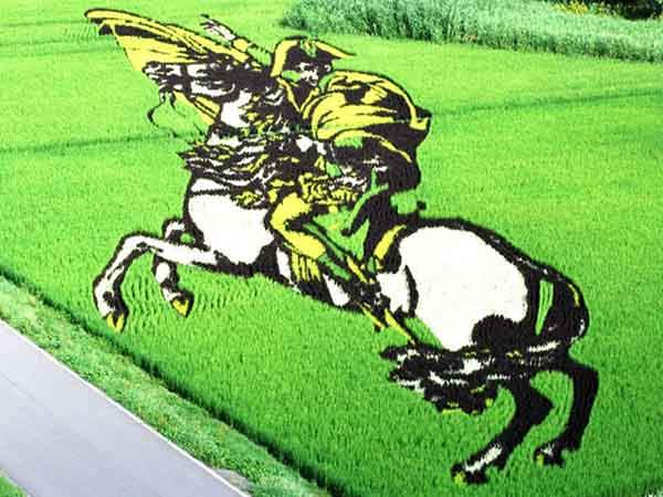 these-rice-fields-in-japan-look-like-ordinary-rice-fields-but-take-a-look-what-happens-next-artnaz-com-9