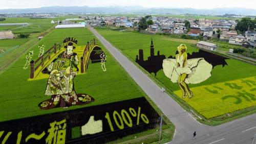 these-rice-fields-in-japan-look-like-ordinary-rice-fields-but-take-a-look-what-happens