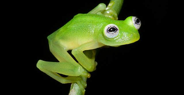 unusual-frog-photography-51__880
