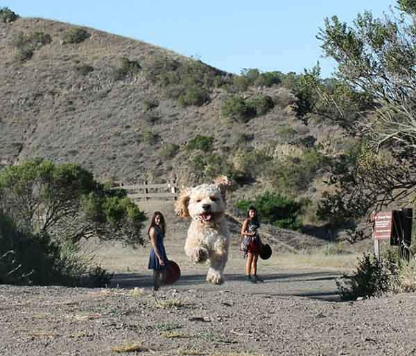 optical-illusion-giant-dog-cover-image-2